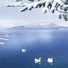 湖面雪枝装饰画