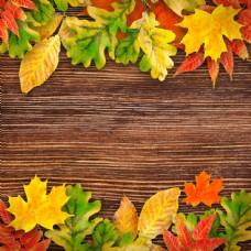 木板与树叶背景边框图片