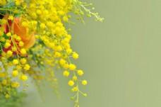 美丽的黄色花朵图片