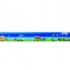 海底世界深海鱼