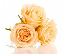 美丽的玫瑰花束图片