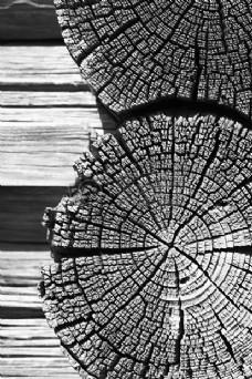 干木的横切面