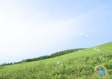 绿色草地与水泡图片