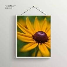 花卉摄影无框装饰画