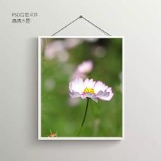 鲜花摄影无框装饰画