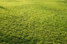平坦的绿色草坪高清风景图片图片