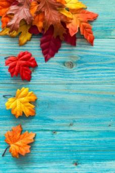 落叶与木板图片