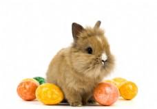 可爱兔子彩蛋摄影素材图片