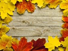 枫叶边框与木板图片