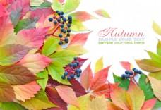 秋天枫叶背景边框图片