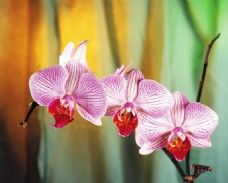 花朵抽象背景装饰画
