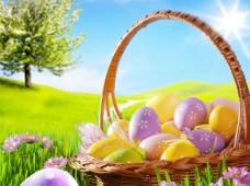 阳光下的可爱彩蛋图片