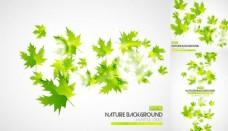 绿色秋叶背景