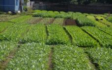 蔬菜基地一角