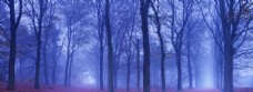 唯美森林景色