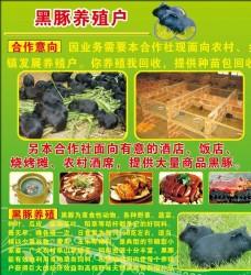 黑豚养殖户广告宣传单