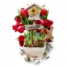 花盆里的鲜花图片