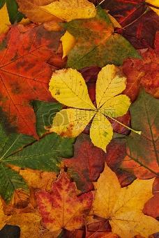 五颜六色的叶子