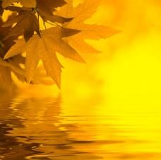 秋天树叶与水面倒影图片