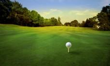 草地上的高尔夫球图片