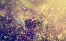 雨中展翅的蝴蝶图片