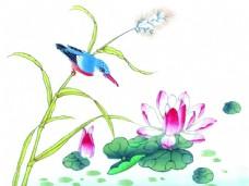 植物上的小鸟与莲花图片