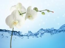 水元素花卉装饰背景墙