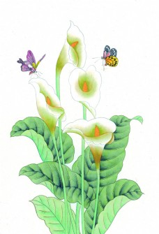 蝴蝶与水仙花图片