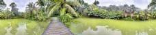 美丽湖水边上的树林图片