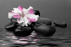 花和石头摄影图片