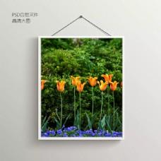 花卉鲜花无框装饰画