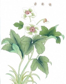 树叶与花国画图片