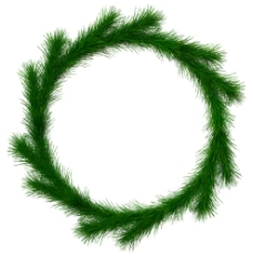 绿色松枝摄影素材图片