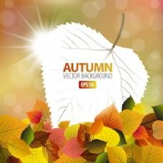 秋天背景与白叶绘画