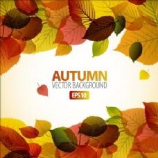 秋天背景框架与树叶