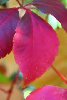 彩色叶子摄影图片