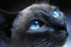 小猫的眼睛摄影图片