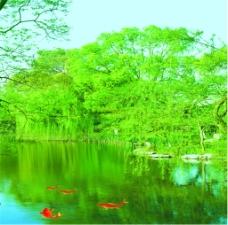 绿色湖面风景装饰画