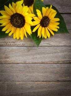向日葵与木板图片