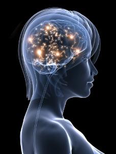 女性大脑神经图片
