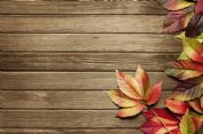 枫叶与木板背景图片