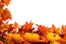 枫叶和南瓜图片