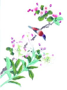 花卉植物上的小鸟图片