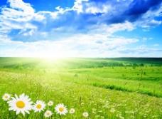 阳光普照的草原图片