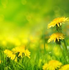 美丽春天鲜花背景图片