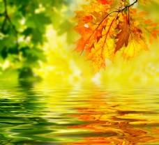树叶背景墙