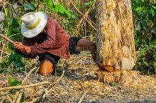 伐木工人砍树