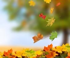 飘落的树叶图片