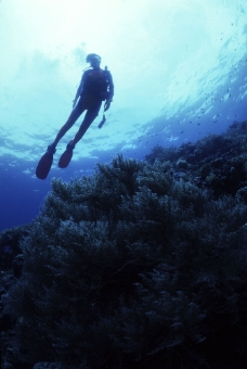 海底生物与潜水人员图片