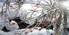 冬天花卉植物绘画图片